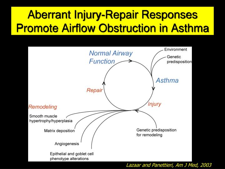 Aberrant Injury-Repair Responses Promote Airflow Obstruction in Asthma