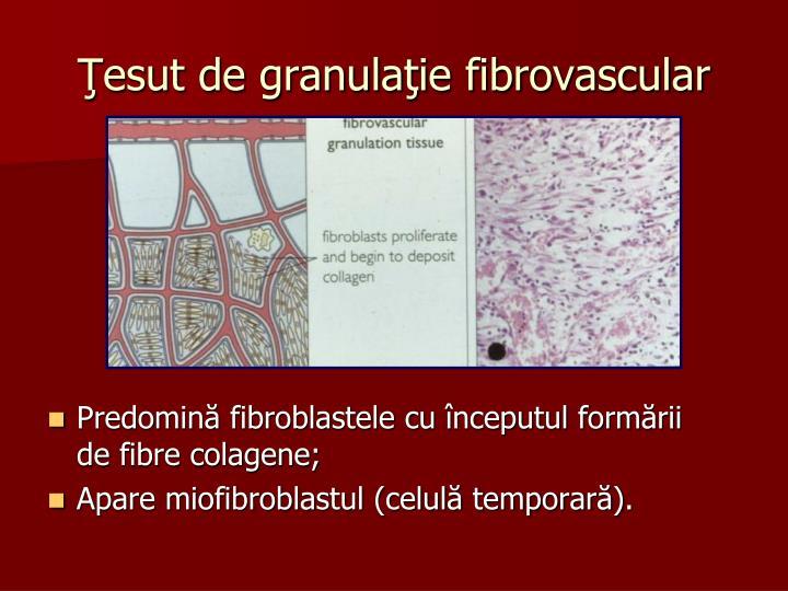 Ţesut de granulaţie fibrovascular