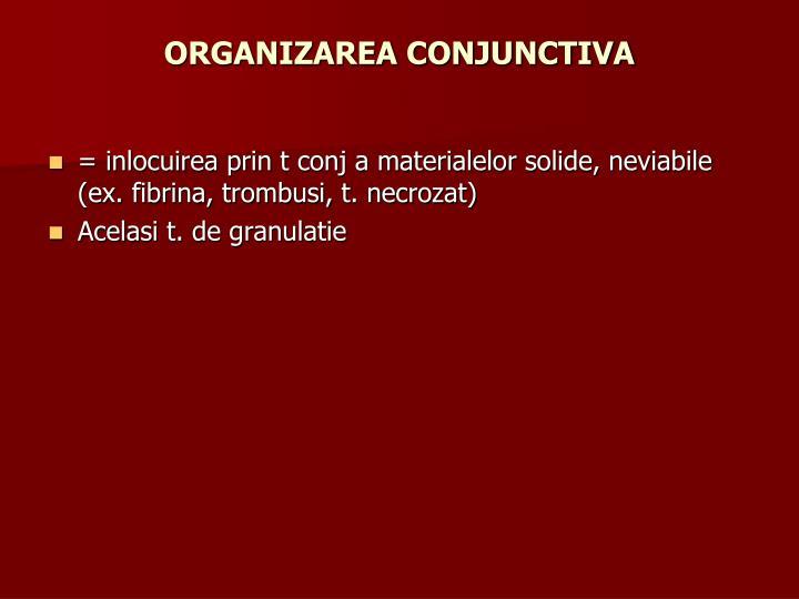 ORGANIZAREA CONJUNCTIVA