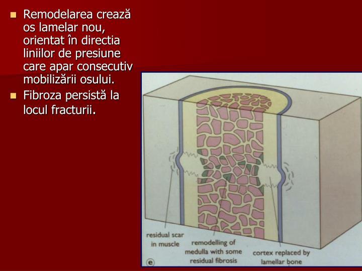 Remodelarea crează os lamelar nou, orientat în