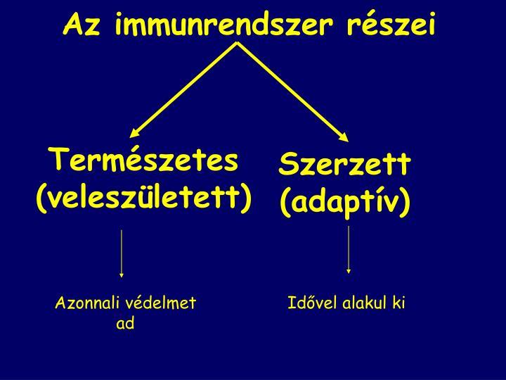 Az immunrendszer részei