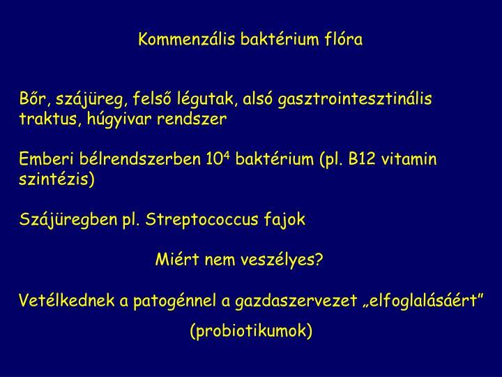 Kommenzális baktérium flóra