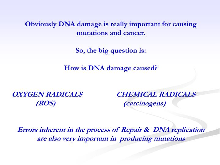 Obviously DNA damage is really important for causing mutations and cancer.