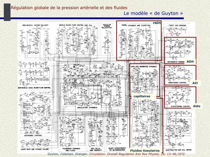 Régulation globale de la pression artérielle et des fluides