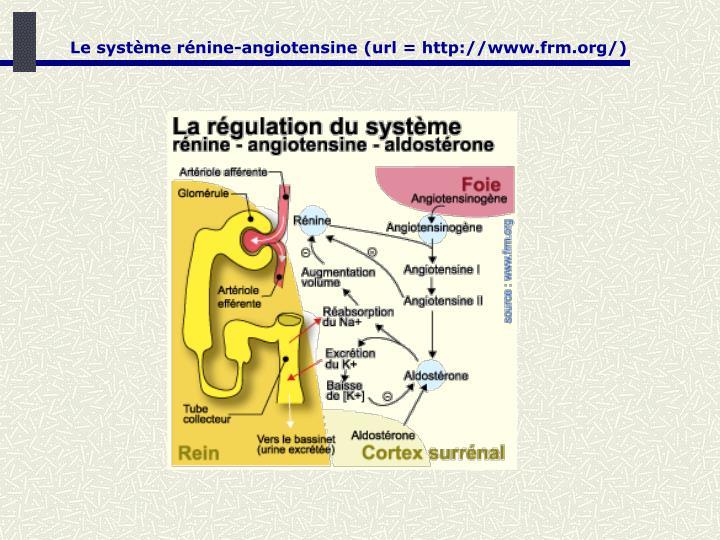 Le système rénine-angiotensine (url = http://www.frm.org/)