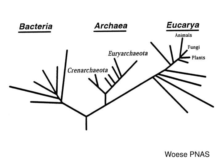 Woese PNAS