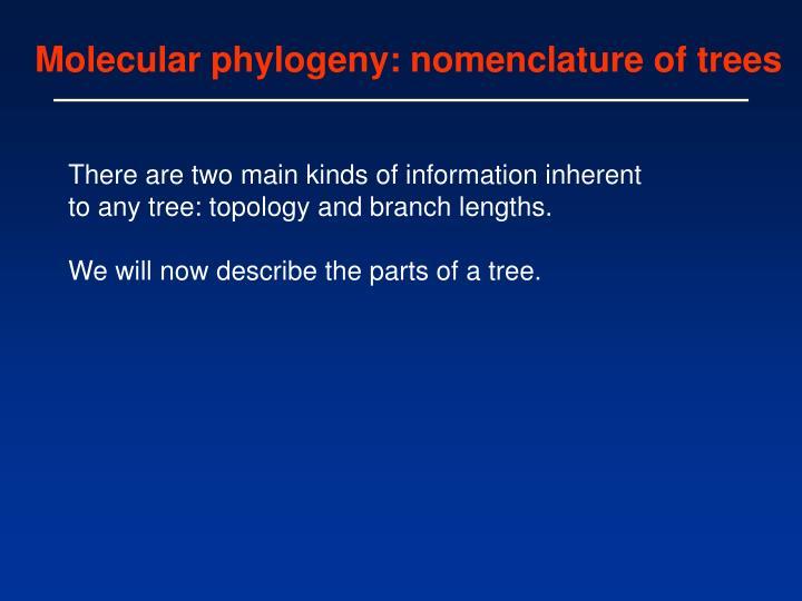 Molecular phylogeny: nomenclature of trees