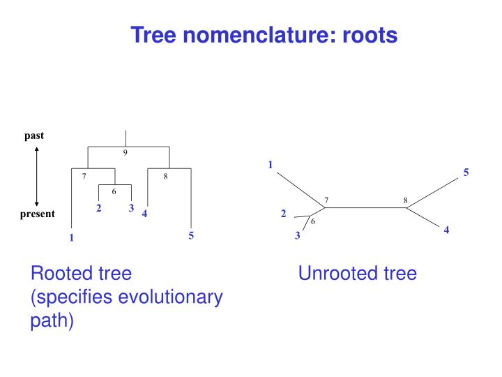 Tree nomenclature: roots