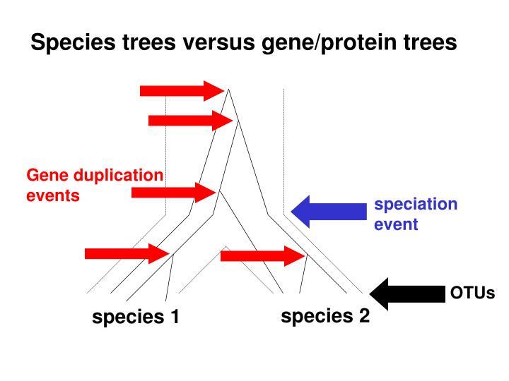 Species trees versus gene/protein trees