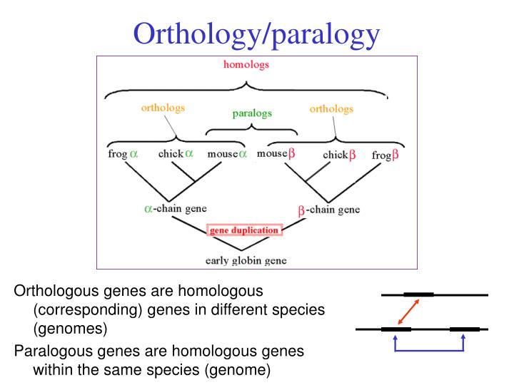Orthology/paralogy