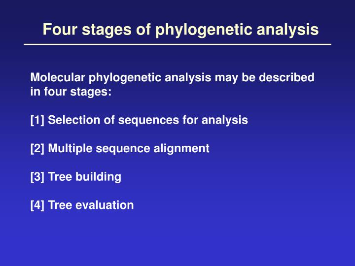 Four stages of phylogenetic analysis