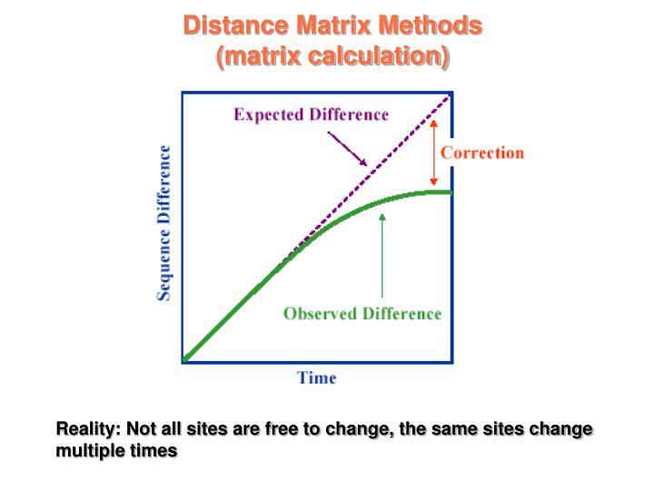 Distance Matrix Methods