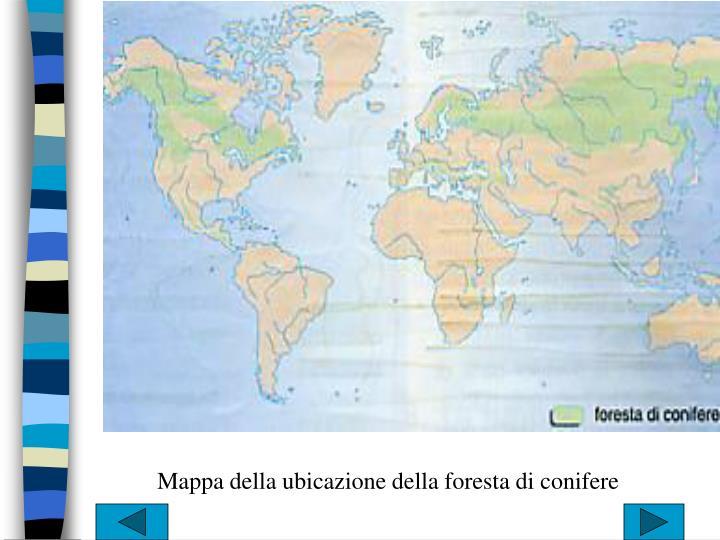 Mappa della ubicazione della foresta di conifere