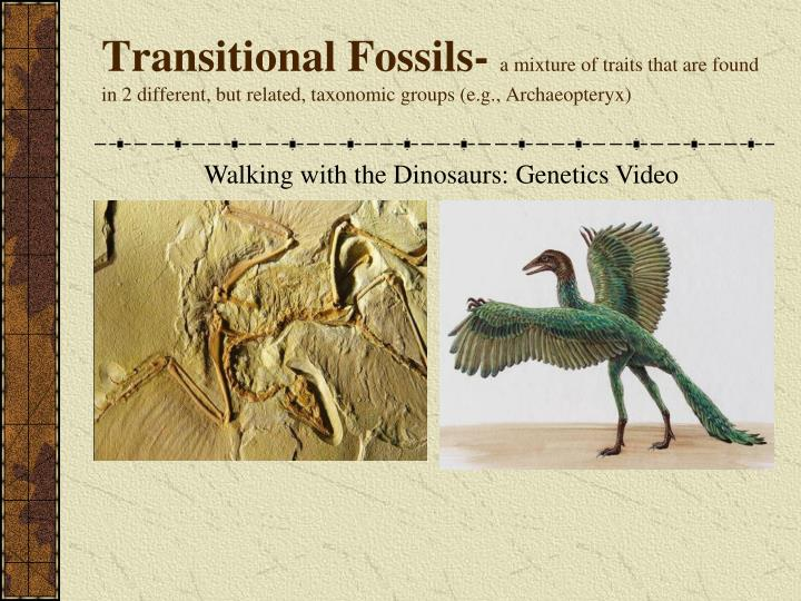 Transitional Fossils-