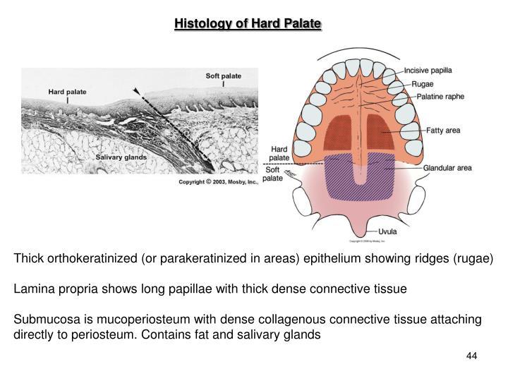 Histology of Hard Palate