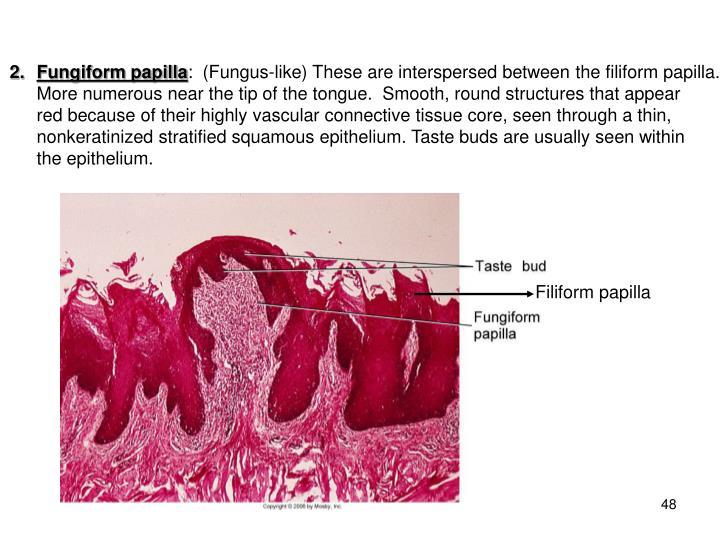 Fungiform papilla