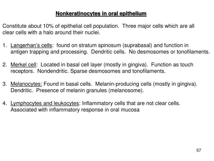 Nonkeratinocytes in oral epithelium