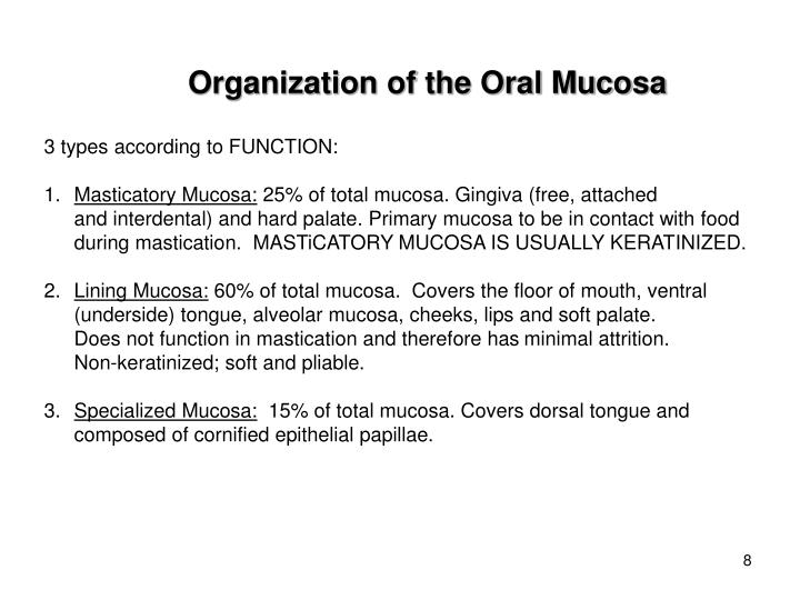 Organization of the Oral Mucosa