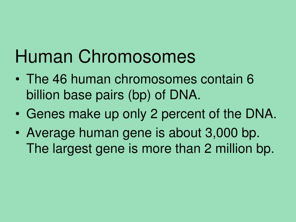 Human Chromosomes Powerpoint Ppt Presentation