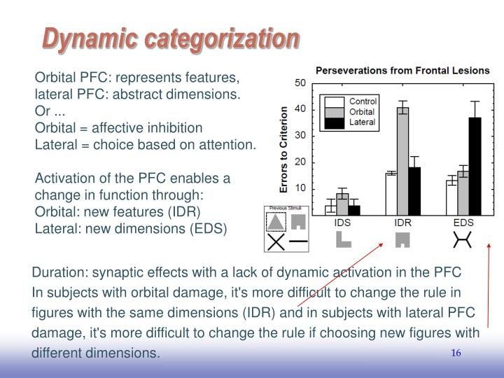 Orbital PFC: represents features, lateral PFC: abstract dimensions.