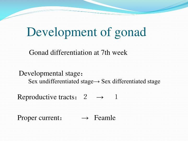 Development of gonad