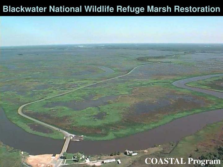 Blackwater National Wildlife Refuge Marsh Restoration