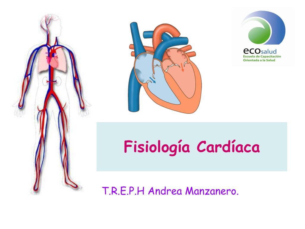 PPT - Fisiología Cardíaca PowerPoint Presentation - ID:4633364