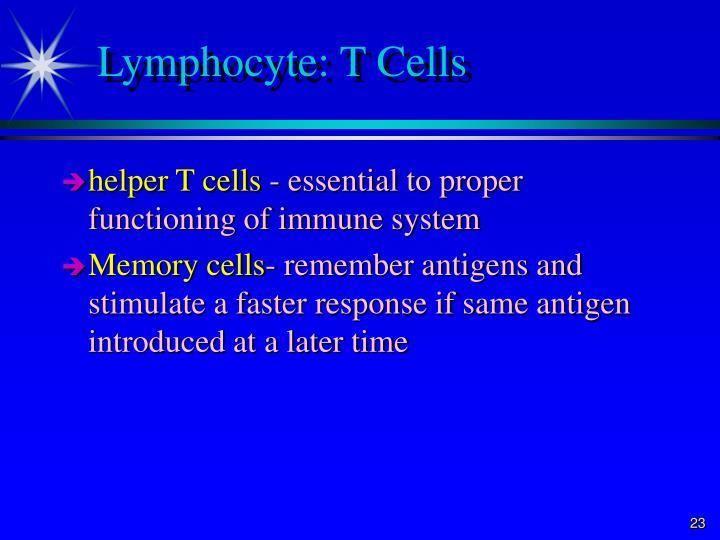 Lymphocyte: T Cells