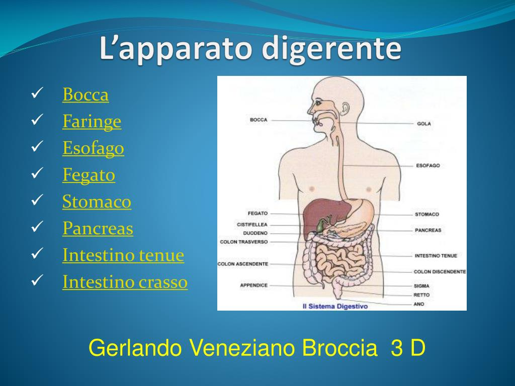 Ppt l'apparato digerente powerpoint presentation id:2462473.