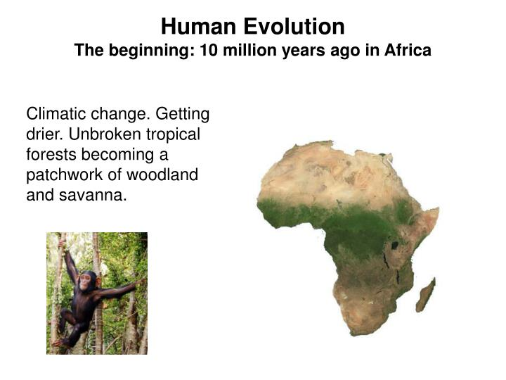 human evolution the beginning 10 million years ago in africa n.