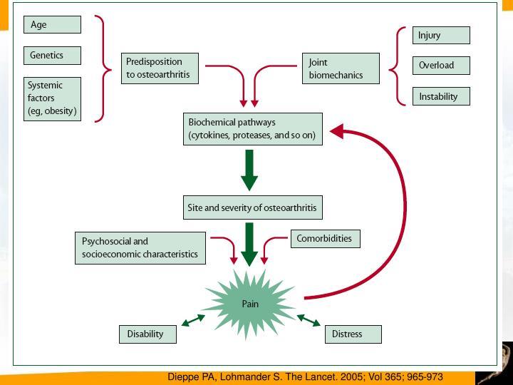 Dieppe PA, Lohmander S. The Lancet. 2005; Vol 365; 965-973