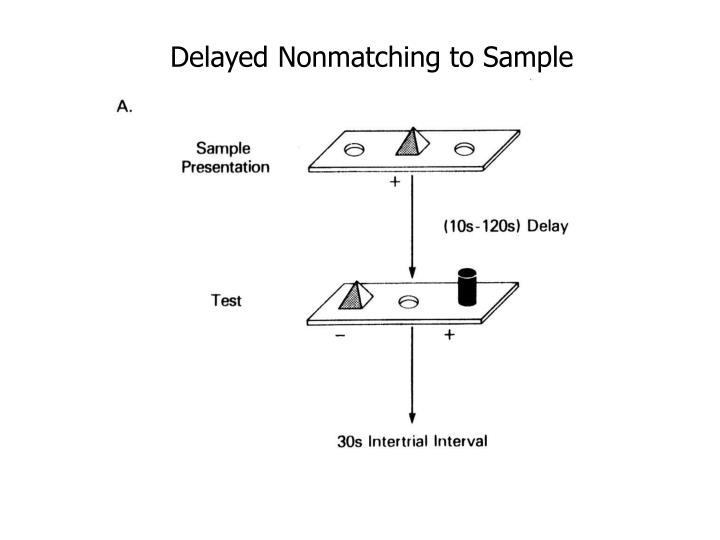 Delayed Nonmatching to Sample