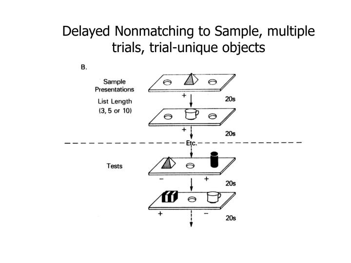 Delayed Nonmatching to Sample, multiple trials, trial-unique objects