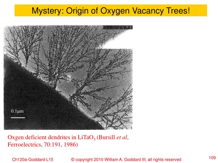 Mystery: Origin of Oxygen Vacancy Trees!