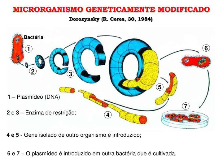 MICRORGANISMO GENETICAMENTE MODIFICADO