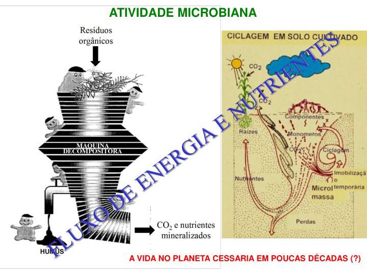 ATIVIDADE MICROBIANA