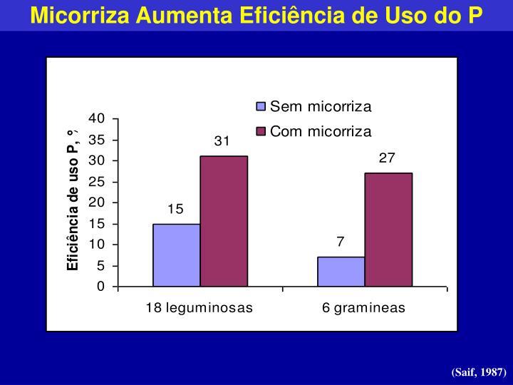 Micorriza Aumenta Eficiência de Uso do P