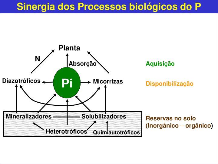 Sinergia dos Processos biológicos do P