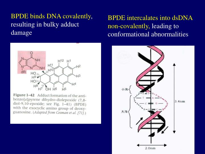 BPDE binds DNA covalently