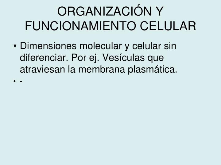 ORGANIZACIÓN Y FUNCIONAMIENTO CELULAR