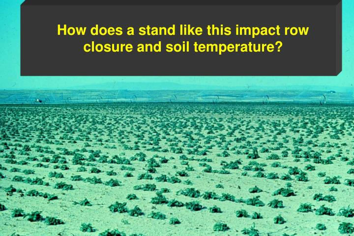How does a stand like this impact row closure and soil temperature?