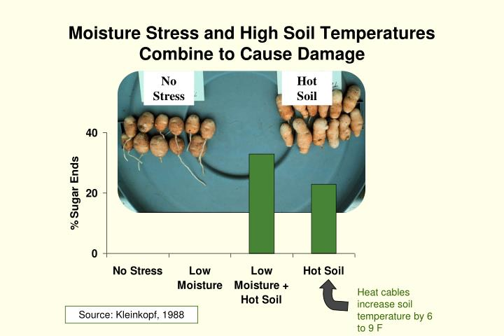 Moisture Stress and High Soil Temperatures