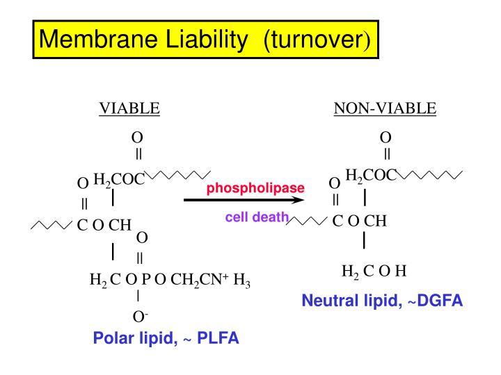 Membrane Liability  (turnover