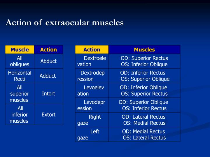 Action of extraocular muscles