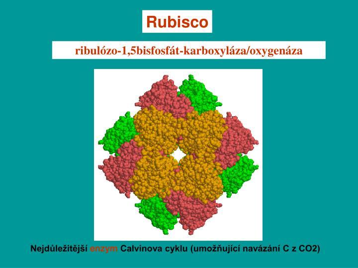 Rubisco