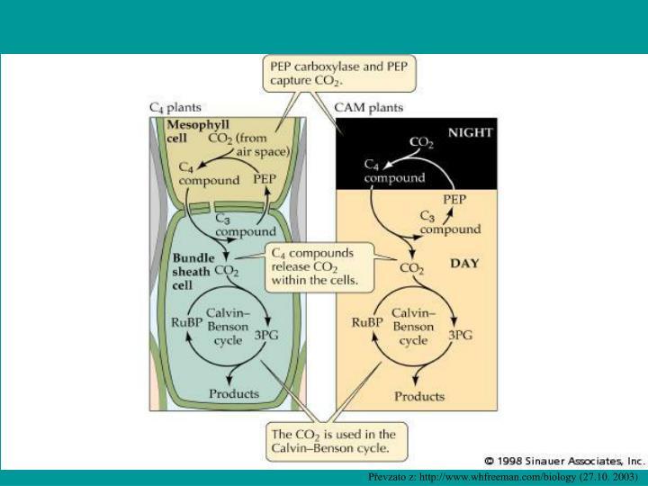 Převzato z: http://www.whfreeman.com/biology (27.10.