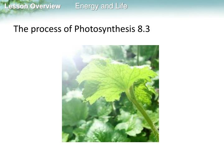 The process of Photosynthesis 8.3