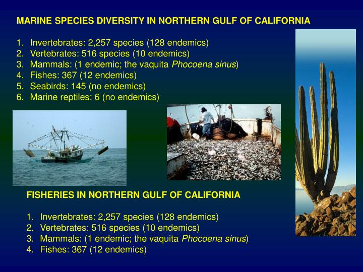 MARINE SPECIES DIVERSITY IN NORTHERN GULF OF CALIFORNIA