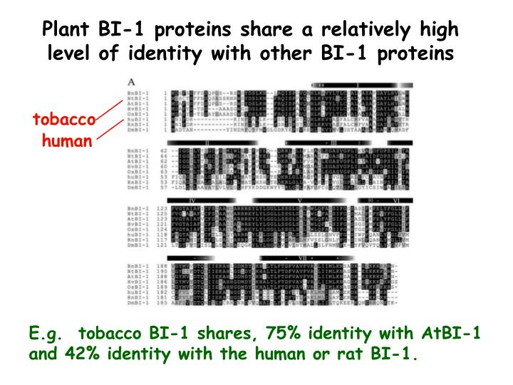 Plant BI-1 proteins share a relatively high level of identity with other BI-1 proteins