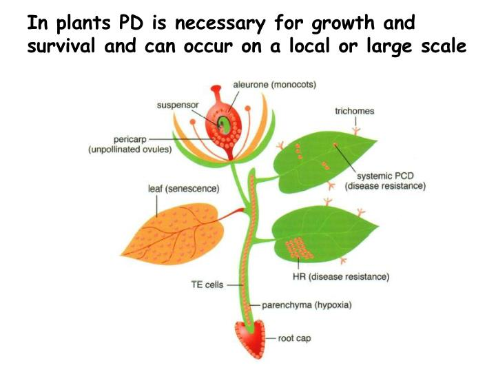 In plants PD is necessary for growth and survival and can occur on a local or large scale